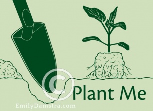 Plant Me – Emily S. Damstra