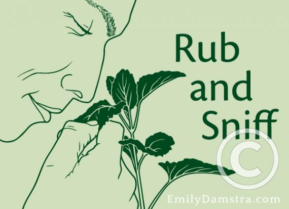 Rub and Sniff illustration
