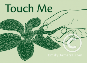 Touch Me – Emily S. Damstra