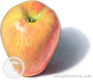 Sonya apple – Emily S. Damstra
