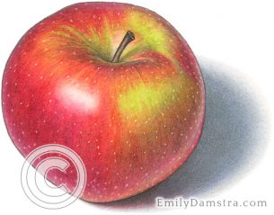 Spartan apple – Emily S. Damstra