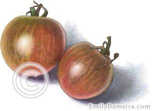 Black cherry tomatoes – Emily S. Damstra