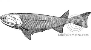 Illustration fossil fish Cheirolepis