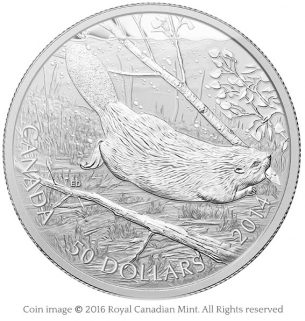 Beaver swimming 2014 silver coin