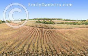 Corn field – Emily S. Damstra
