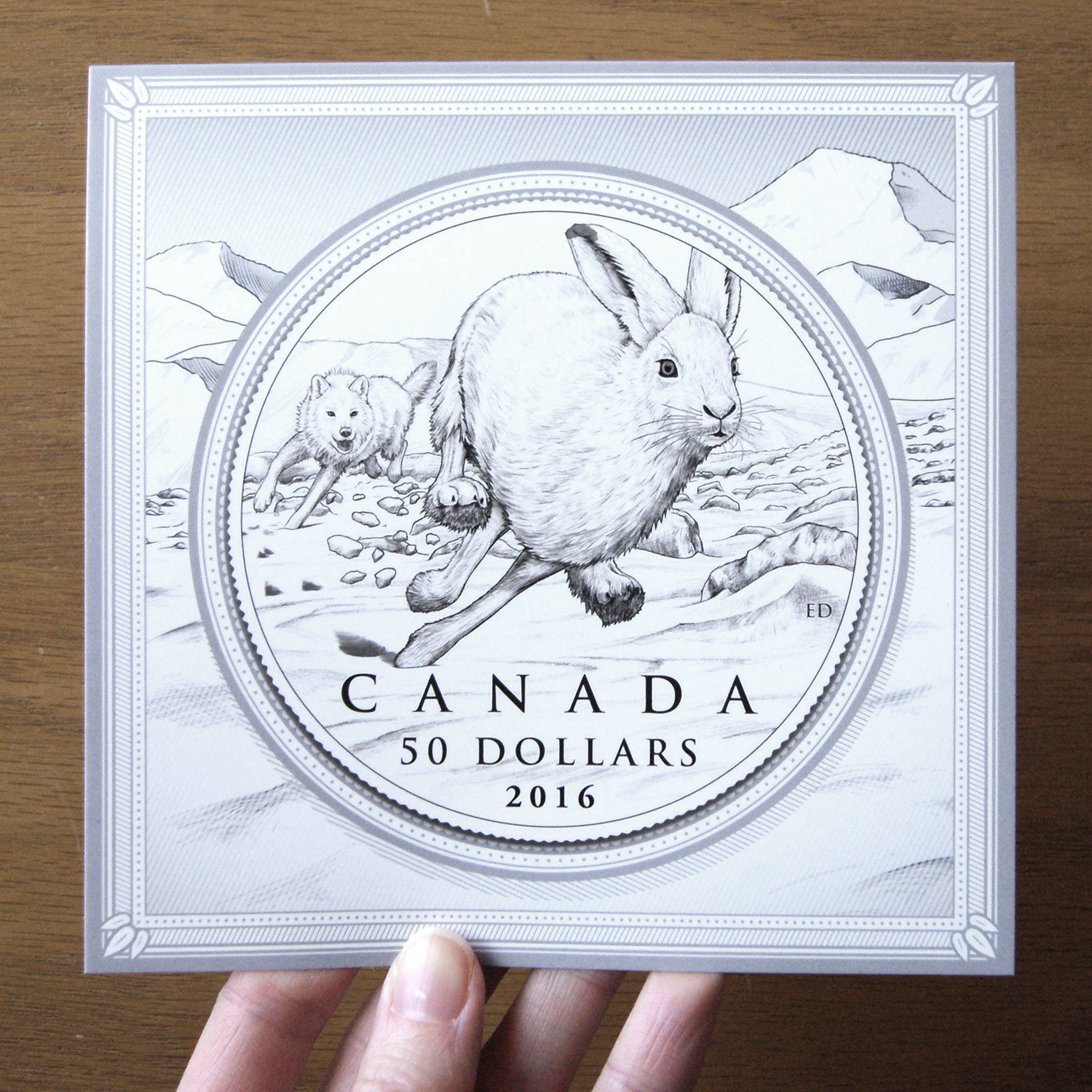 Arctic hare coin illustration by Emily damstra