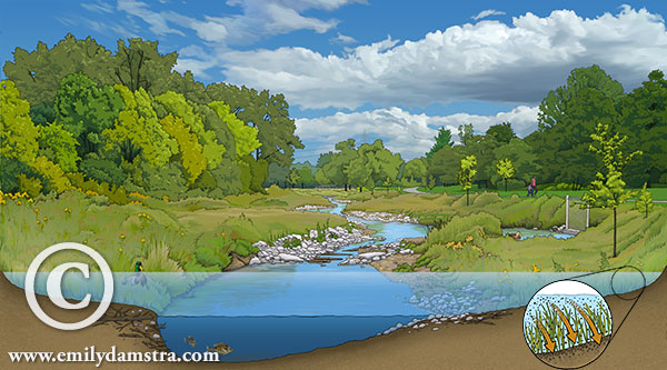 AFTER stream restoration - illustration © Emily S. Damstra