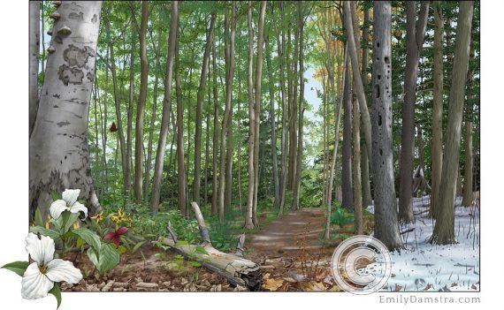 Illustration forest four seasons