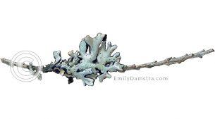 Lichen on a tiny twig – Emily S. Damstra