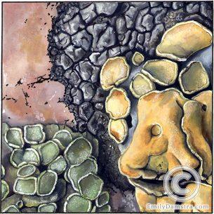 Lichens on pink granite 2 – Emily S. Damstra