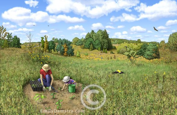 Meadow restoration illustration