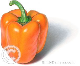 Orange pepper – Emily S. Damstra