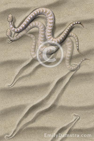 American Sidewinder Crotalus cerastes illustration