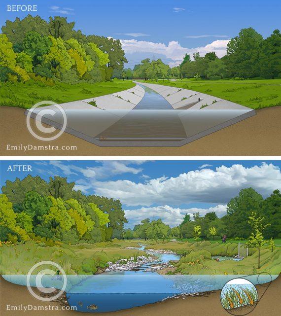stream restoration illustrations