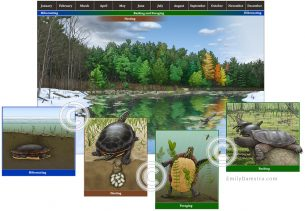 Turtle habitat in four seasons – Emily S. Damstra